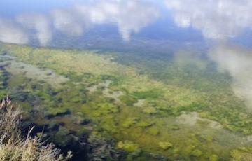 Cosmétique marine: le pouvoir des algues