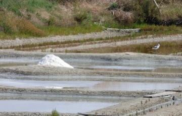 Les ressources naturelles des marais salants