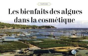 ENJOY : LES BIENFAITS DES ALGUES DANS LA COSMÉTIQUE