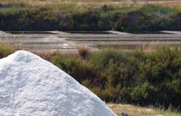 THE SALT MARSHES LIFE... TO THE END OF THE SEASON